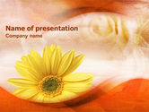 Holiday/Special Occasion: African Daisy PowerPoint Template #01322