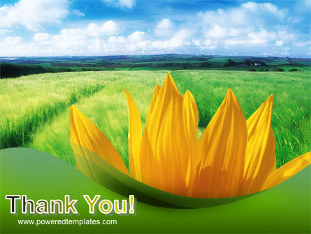 Sunflower In Green PowerPoint Template Slide 20