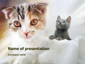 Animals and Pets: Modello PowerPoint - Gatti #01373