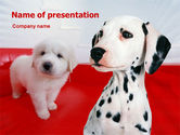 Animals and Pets: Modello PowerPoint - Dalmata #01392