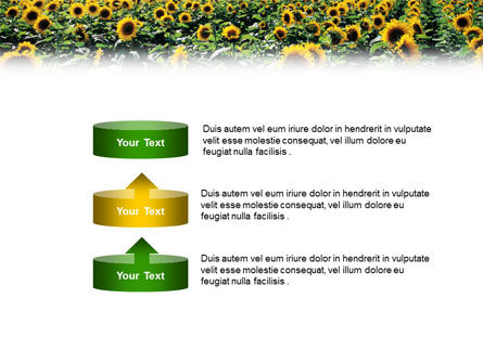Field of Sunflowers PowerPoint Template Slide 10