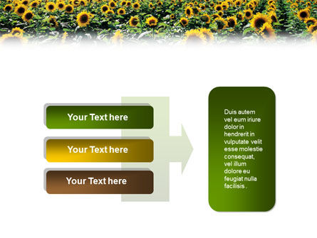 Field of Sunflowers PowerPoint Template Slide 11