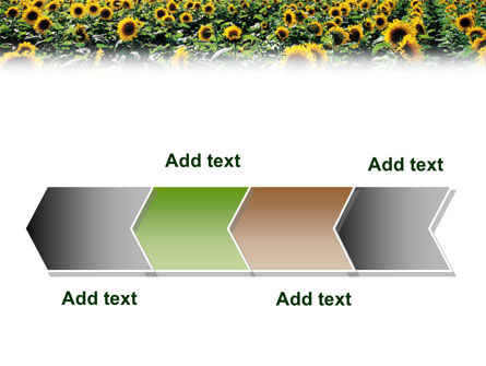 Field of Sunflowers PowerPoint Template Slide 16