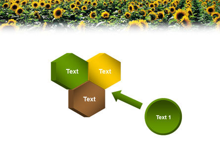 Field of Sunflowers PowerPoint Template Slide 19