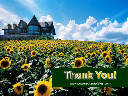 Field of Sunflowers PowerPoint Template Slide 20