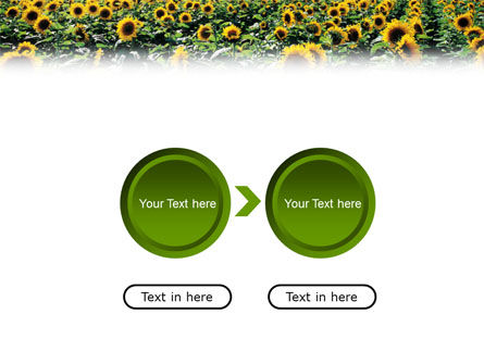 Field of Sunflowers PowerPoint Template Slide 5
