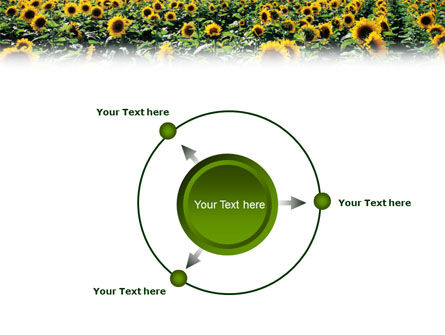 Field of Sunflowers PowerPoint Template Slide 7