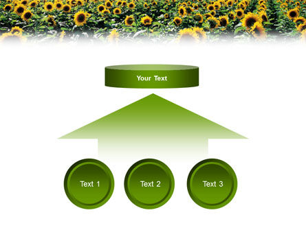 Field of Sunflowers PowerPoint Template Slide 8