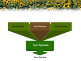 Field of Sunflowers PowerPoint Template#3