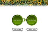 Field of Sunflowers PowerPoint Template#5