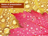 Nature & Environment: Leaves in Dew PowerPoint Template #01487