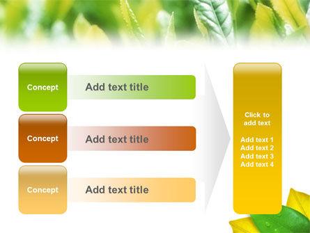 Indian Summer PowerPoint Template Slide 12