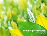 Indian Summer PowerPoint Template#1