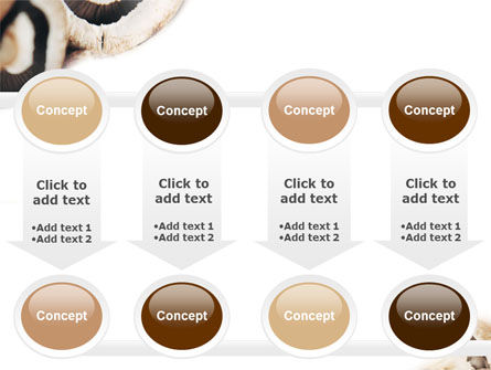 Mushrooms PowerPoint Template Slide 18