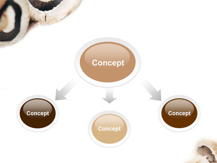 Mushrooms PowerPoint Template, Slide 4, 01601, Food & Beverage — PoweredTemplate.com