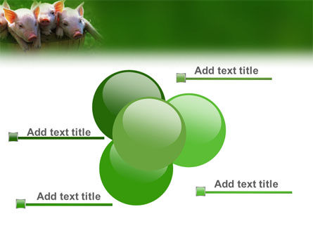 Pig PowerPoint Template Slide 10