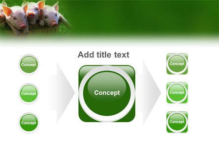 Pig PowerPoint Template Slide 17