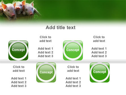 Pig PowerPoint Template Slide 19