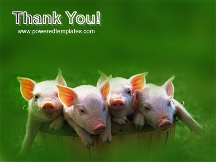 Pig PowerPoint Template Slide 20