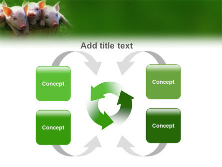 Pig PowerPoint Template Slide 6