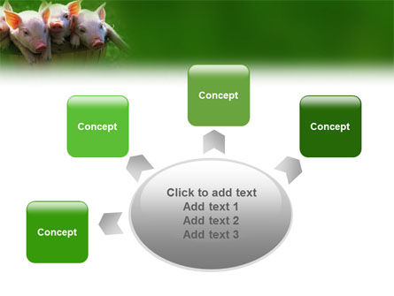 Pig PowerPoint Template Slide 7