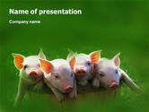 Agriculture: Pig PowerPoint Template #01708
