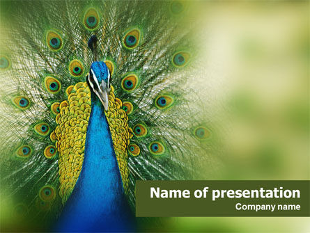 Animals and Pets: Plantilla de PowerPoint - pavo real #01711