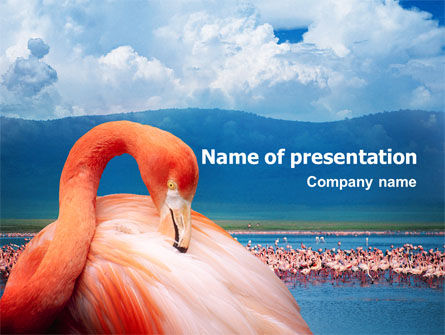 Animals and Pets: Flamingo PowerPoint Template #01725