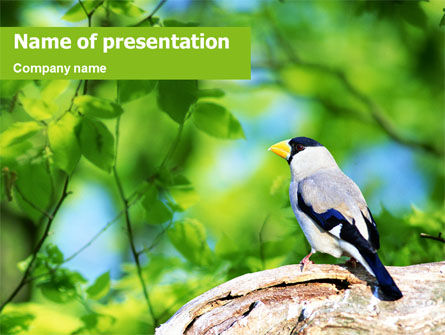 Animals and Pets: Grijze Vogel PowerPoint Template #01764