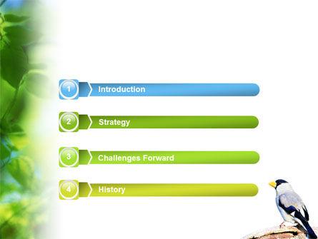 Gray Bird PowerPoint Template, Slide 3, 01764, Animals and Pets — PoweredTemplate.com
