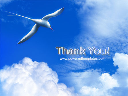 Sea Gull PowerPoint Template Slide 20