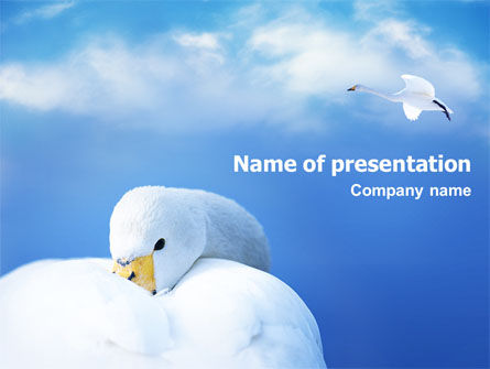 Animals and Pets: Swan PowerPoint Template #01797