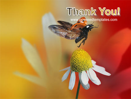 Ladybug PowerPoint Template Slide 20