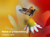 Nature & Environment: Lieveheersbeestje PowerPoint Template #01812