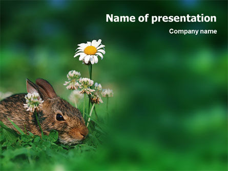 Animals and Pets: Modèle PowerPoint de lapin #01815