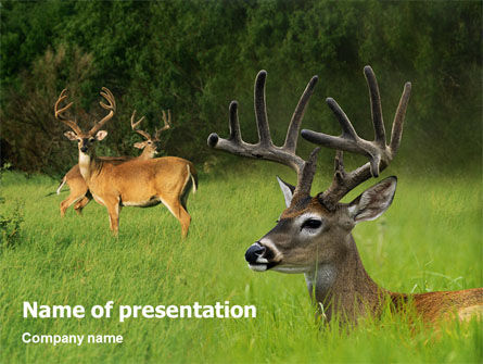 Nature & Environment: Modèle PowerPoint de cerf #01838