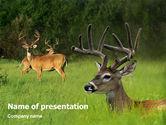 Animals and Pets: Hirsch PowerPoint Vorlage #01838