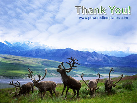 Deers On The Mountain Pastures PowerPoint Template Slide 20