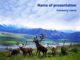 Nature & Environment: Deers On The Mountain Pastures PowerPoint Template #01850