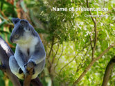 Animals and Pets: Modello PowerPoint - Koala #01867