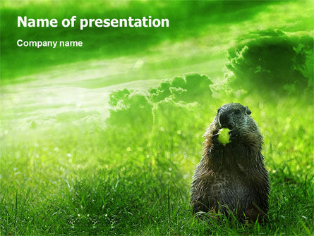 Groundhog PowerPoint Template, 01893, Animals and Pets — PoweredTemplate.com