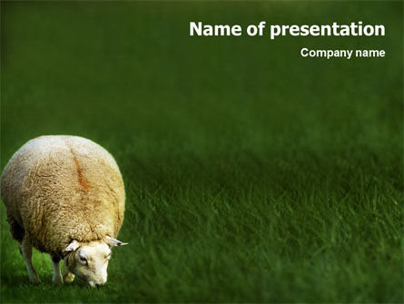Agriculture: Sheep PowerPoint Template #01995