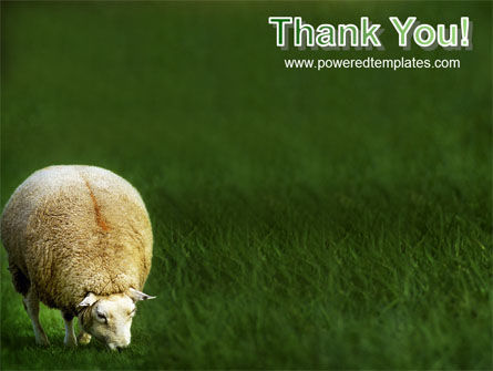 Sheep PowerPoint Template Slide 20