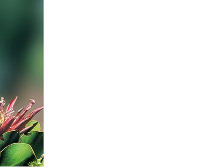 Cape Sugarbird PowerPoint Template, Slide 3, 02052, Nature & Environment — PoweredTemplate.com
