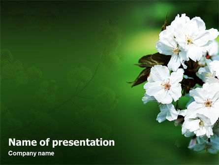 Nature & Environment: Blooming Cherry Tree In The Spring PowerPoint Template #02065
