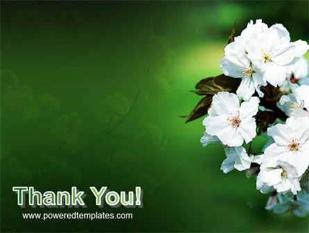 Blooming Cherry Tree In The Spring PowerPoint Template Slide 20