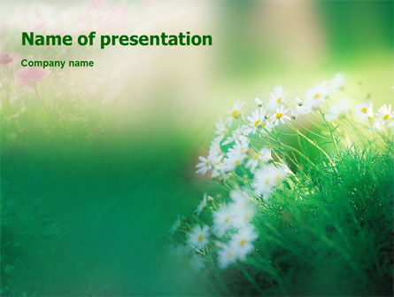 Nature & Environment: Spring Chamomiles PowerPoint Template #02105
