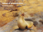 Animals and Pets: Sea Lion PowerPoint Template #02135
