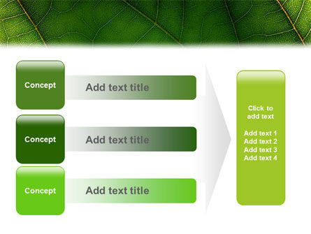 Botany PowerPoint Template Slide 12