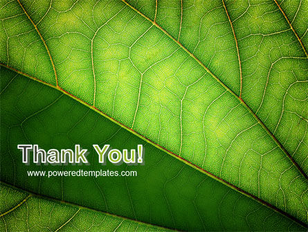 Botany PowerPoint Template Slide 20